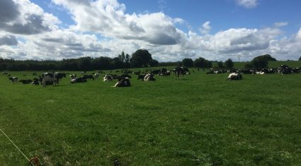 'Dairy farmers with plans to expand should be spending money on grass growth'