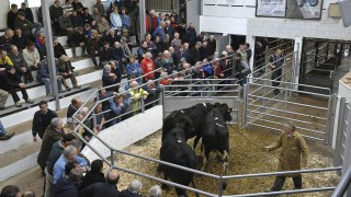 ICOS proposes a fairer system of rates collection for livestock marts