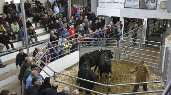 Poor weekend weather has little impact on cattle trade at marts