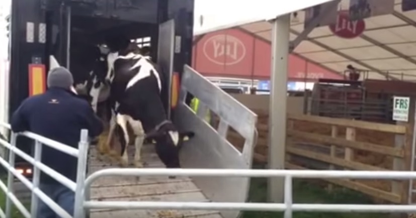 Video: Get a glimpse of behind the scenes at the Ploughing