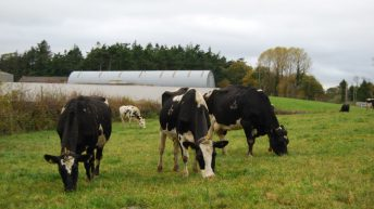 Number of dairy cows in Ireland up 5.7% on June 2014