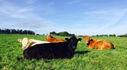 Northern farmers say supply chain failing to provide for beef farmers