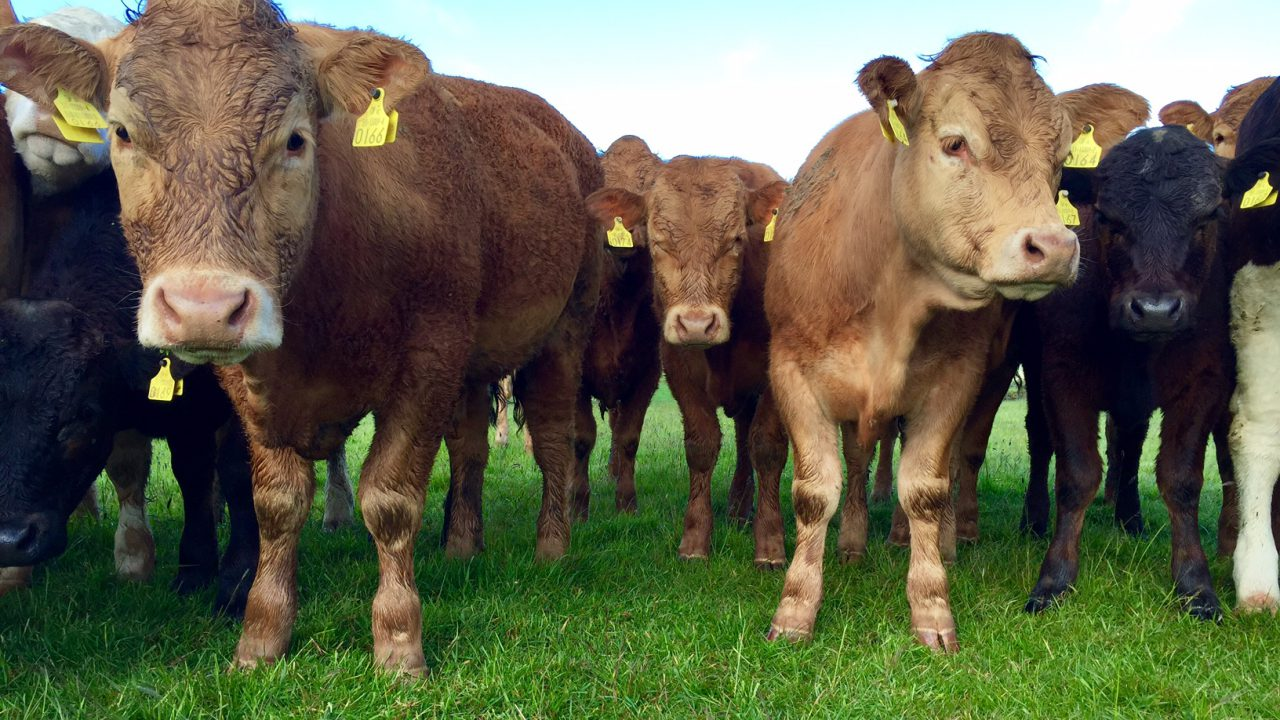 Ireland remains in fifth on EU cattle prices league table