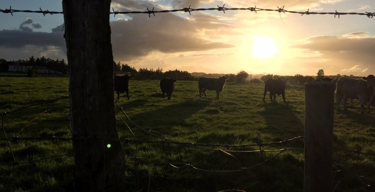 Showers and sunny spells for the Ploughing – Met Eireann