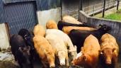 牛肉贸易:工厂试图保持上限价格