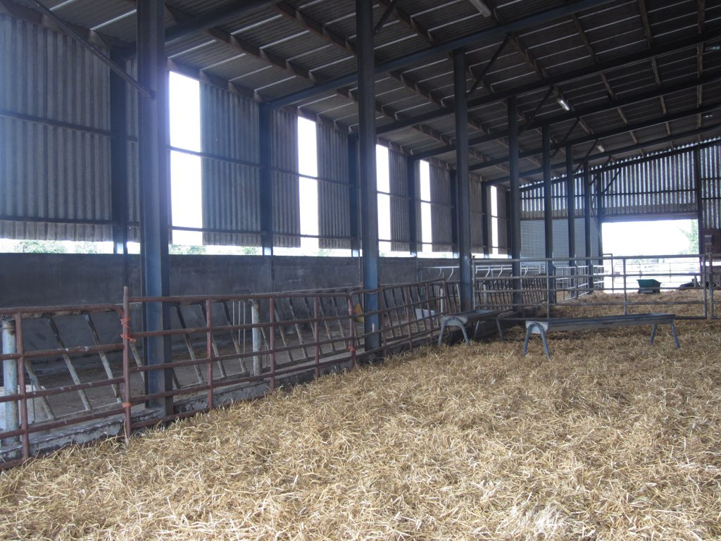 clean straw in shed
