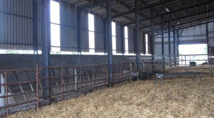 Get winter-ready on the farm with top tips from Teagasc