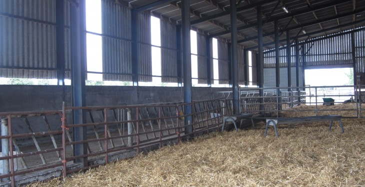 3 alternative options to straw for livestock bedding this winter