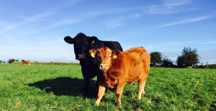 Calls for Beef Data and Genomics Scheme to re-open