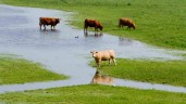 'Imminent risk of farm flooding' raised in Dáil