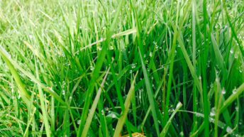 Spring grass may be lacking in a key element – But it's not N, P or K