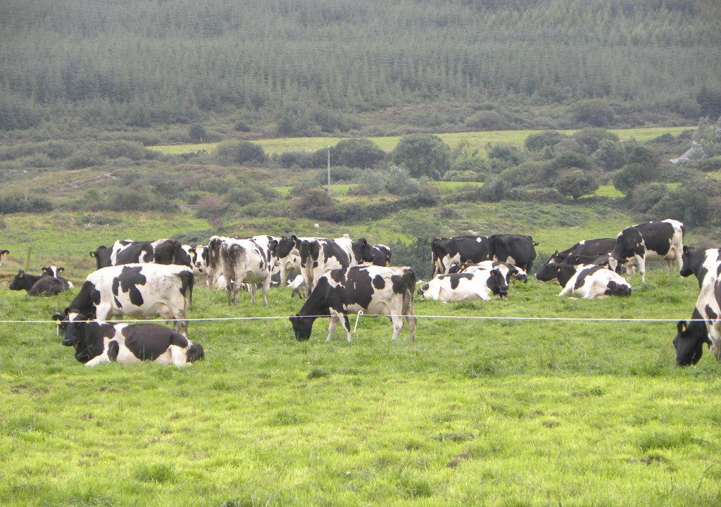Co-ops paying less than 26.9c/L for August milk 'overstepping the mark'