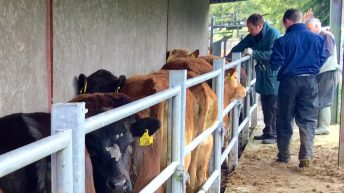 88 confirmed cases of bluetongue in France, 2.2m vaccines available