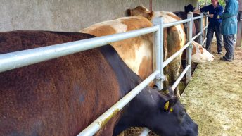 Pre-movement Brucellosis testing to end next week