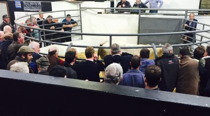 Northern buyers warned southern-born cattle could face 'significant penalties'