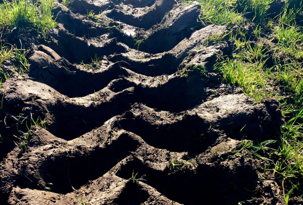 European crops suffering from rain deficit and surplus