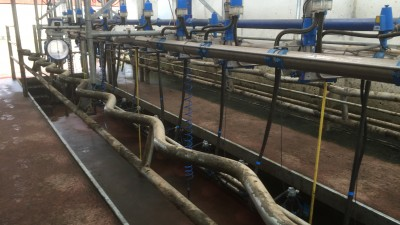 Can you milk with both hands while in the parlour?