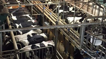 Fears of post quota exodus from winter milk production