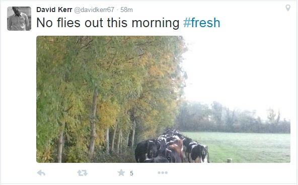 Autumn tweets 1