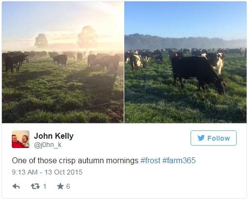 Autumn tweets 3