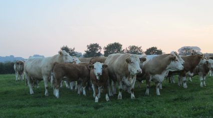 The times they are a changing for the Irish beef industry