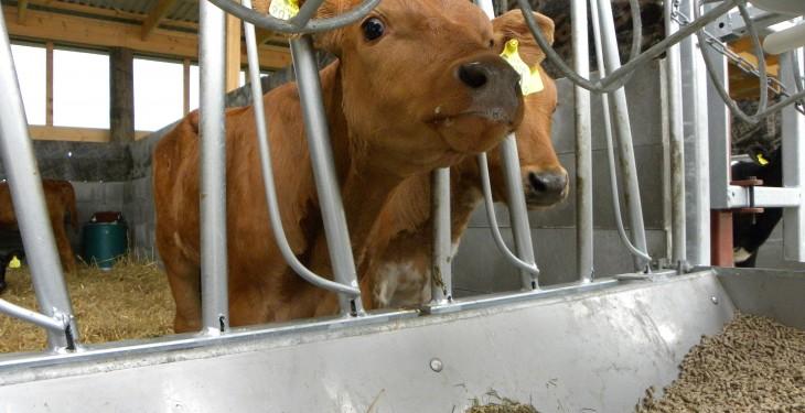 6.7% more calves registered on BVD programme than 2014