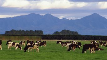 Fonterra increases its farmgate milk price forecast