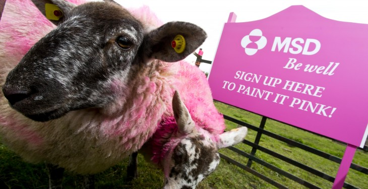Farmers asked to pick up a paint brush to help raise cancer awareness
