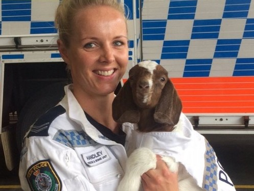 A goat has been made an honorary recruit of an Aussie bomb squad