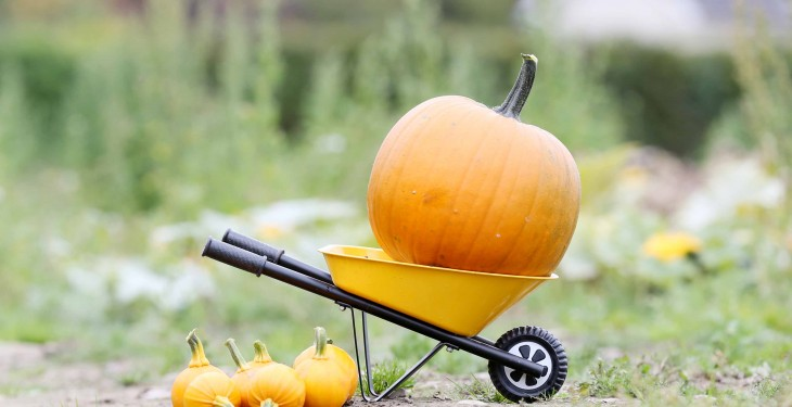 Here's what Halloween traditionally marked in Ireland (it's farming related)