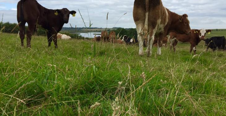 Threatened CAP cuts 'ominous for rural Ireland'