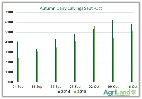 autumn dairy calvings