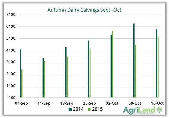 autumn dairy calvings