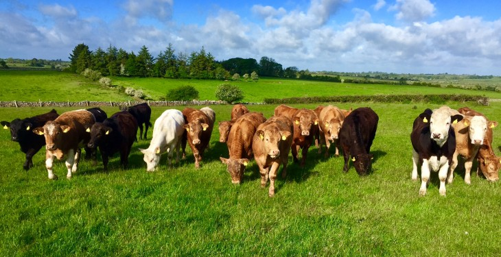 Direct payments keeping the average Irish drystock farm afloat