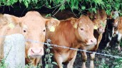 Beef Plan: 'Fair Trade' needs to begin at home