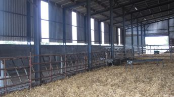 Straw prices: As high as €100 for big bales