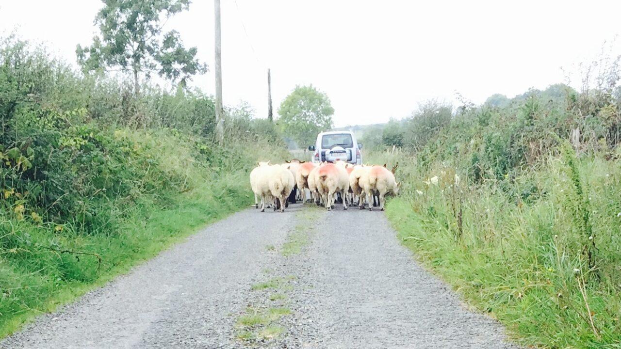 Dry spells and outbreaks of rain promised for the week – Met Eireann