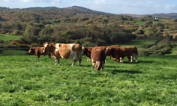 Future of beef farming questioned as 2017 challenges become real