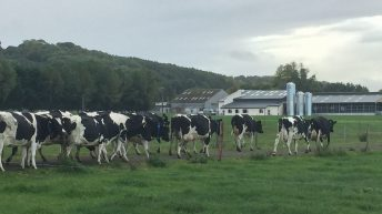 UCD's new dairy herd will show how to maximise output when land is limited