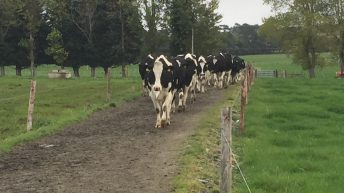 Milk production continued to climb in August