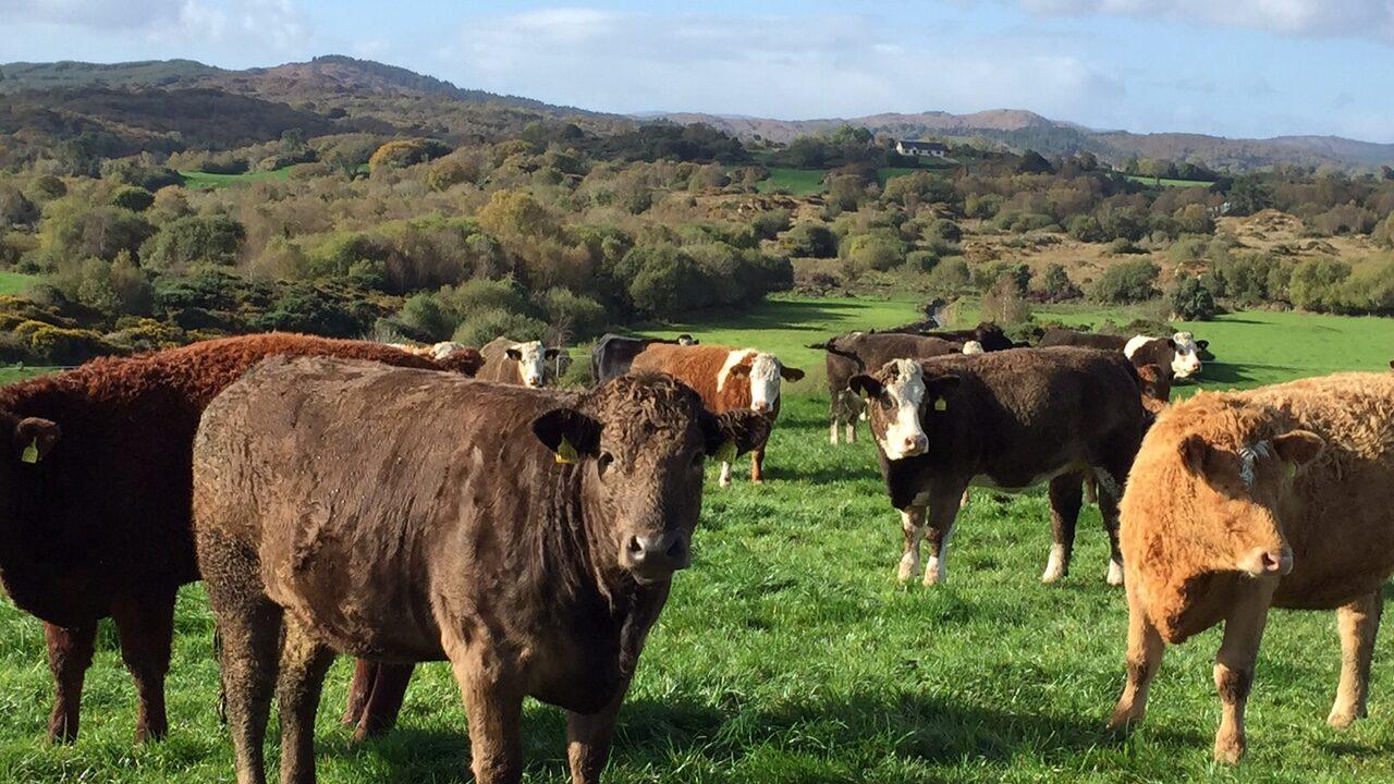 Pics & video of top suckler-to-beef farm from Macra farm walk