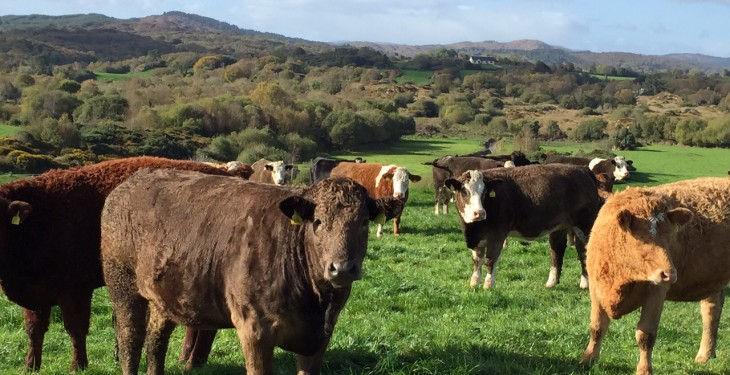 Irish beef tops UK beef imports, while we took 37% of the UK's beef exports