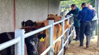 Respiratory disease accounts for 26% of all cattle deaths