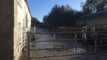 'Large amount' of cattle stolen in Castleblayney raid