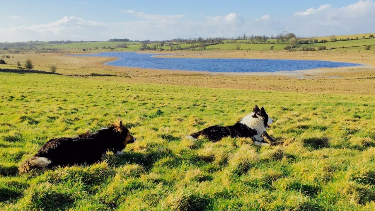 Latest CSO data shows huge variation in Irish farm output