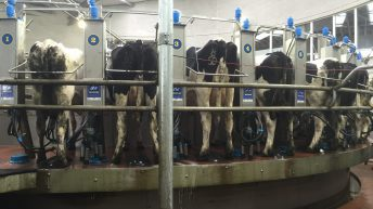 Pics and stats from UCD's new €2m dairy facility