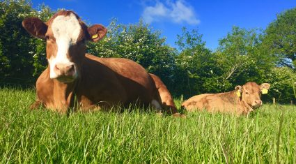 After meeting its €1,000/ha gross margin target what's next for Derrypatrick?