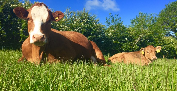 GHG emissions from Irish beef farming lower than dairy levels