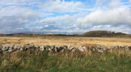 'Hen harrier measure to be amended to RDP by early next year'