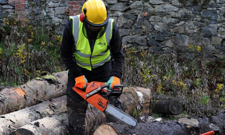 Farmers encouraged to attend seminar on felling trees safely